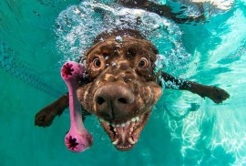 underwater-photos-of-dogs-fetching-their-ball-5